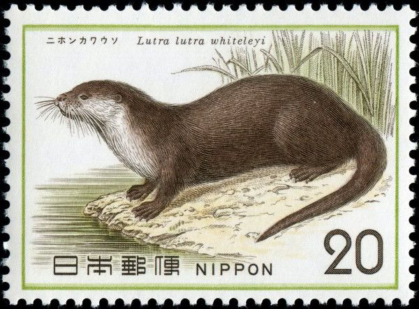 Another beautiful creature gone forever. :( Japanese River Otter Declared Extinct