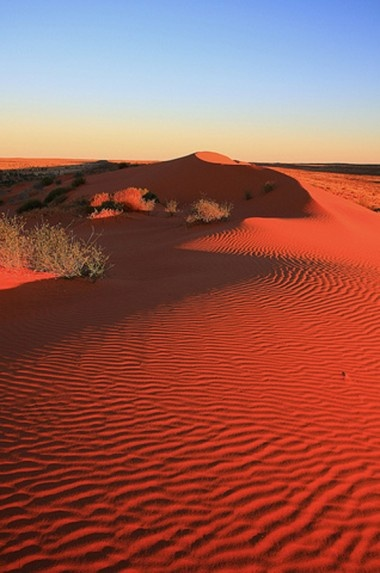 Big Red sand dunes - over 200km long, 40m high and oh, so red... Simpson Desert, Central Australia.