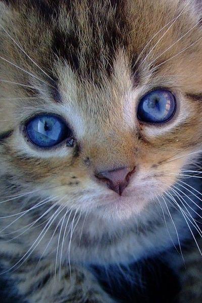 Those blue eyes like ocean