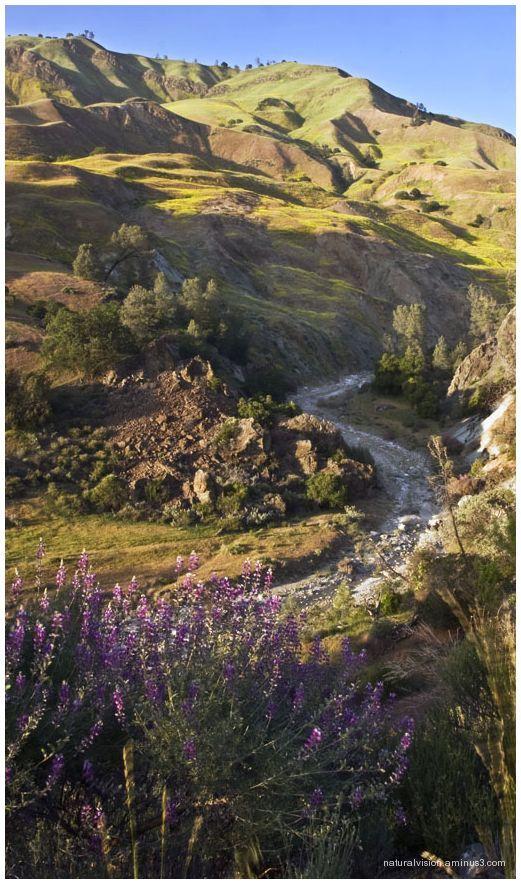 Hollister Hills.