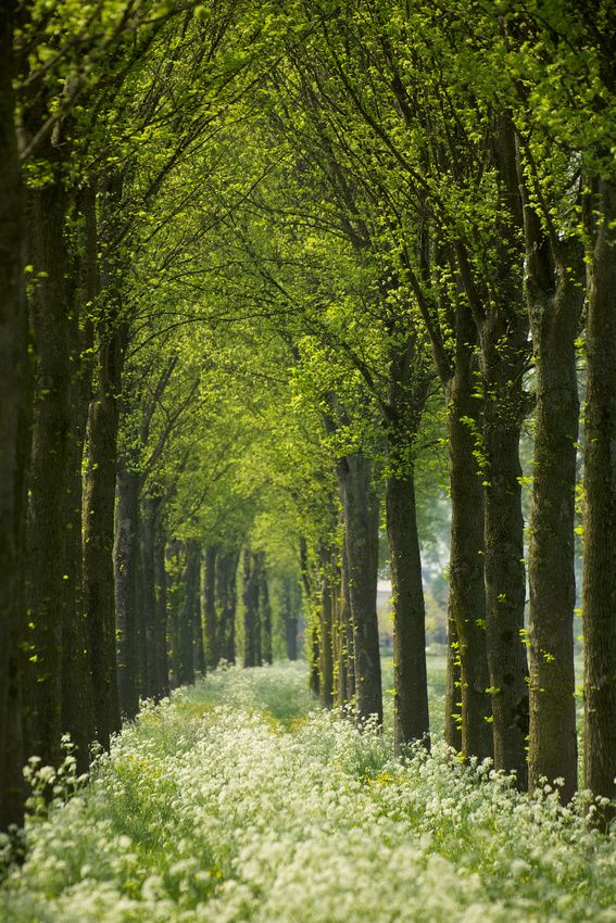 Cow Parsley Curve, Netherlands