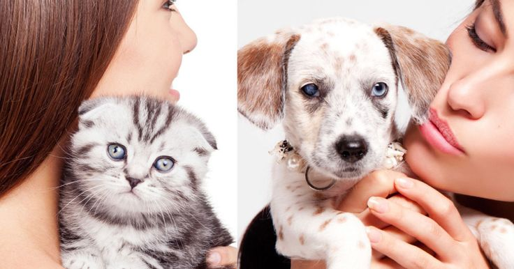 The truth about us and our pets: do dog lovers and cat lovers really show vastly different personality traits?