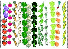 Arizona Vegetable Garden Layout | vegtable garden _a the keys to planning a successful vegetable garden ...