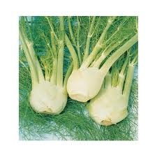 """Fennel Zefa Fiono- Origin Bred at the Swiss Federal Research Station- This variety has 3"""" bulb with edible blue-green stems and feathery green leaves. When compared with some of the traditional Italian varieties, it proved much more resilient under stress and much less likely to bolt. A spring planting will stand till late summer and cold hardy. Use the bulb, stalk, leaves, and seeds in Italian dishes and Mediterranean dishes. Great in a variety of stews, especially bouillabaisse."""