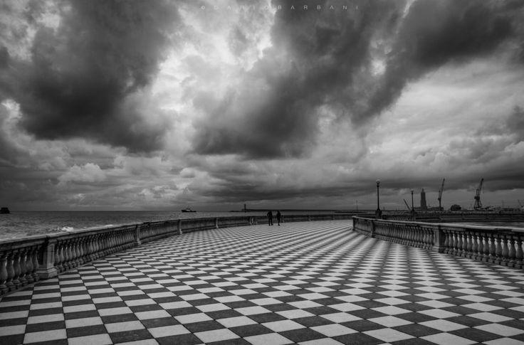 Checkmate by Dario Barbani