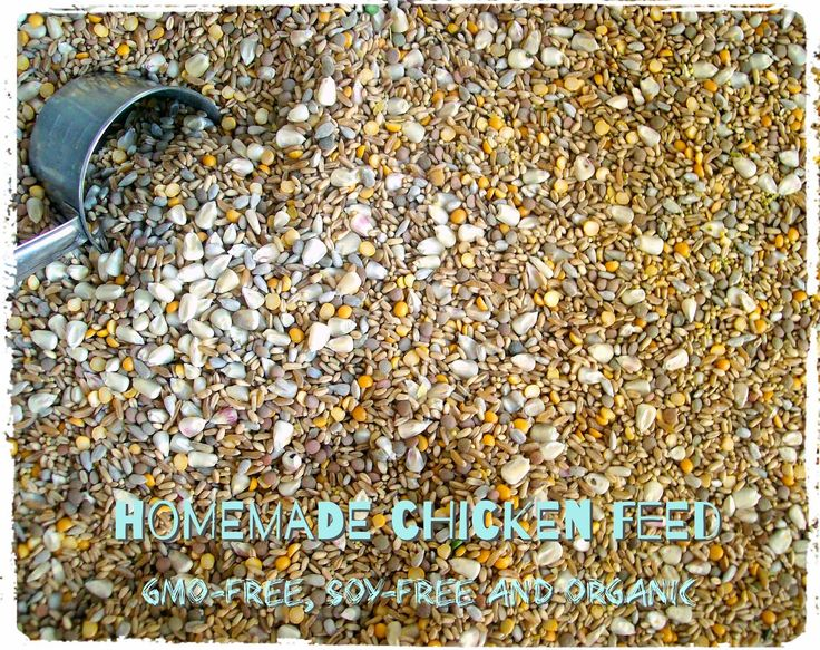 Crunchy Goodness Urban Homesteading: Organic, GMO-free Homemade Chicken Feed