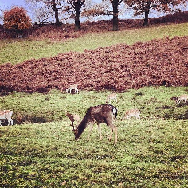 Knole Park in Sevenoaks, Kent