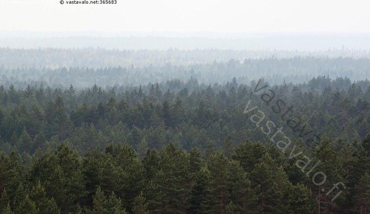 Metsää - metsä maisema metsämaisema näköala kaukaisuus etäisyys havumetsä puut puita havupuut auer ilmaperspektiivi luonto väriperspektiivi