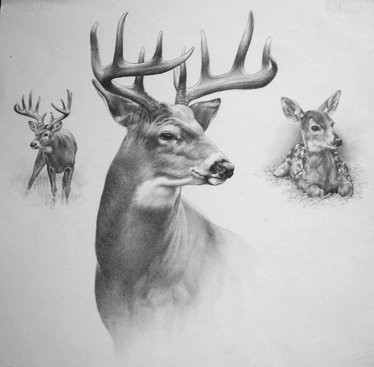Whitetail deer doe and buck painting by greg beecham
