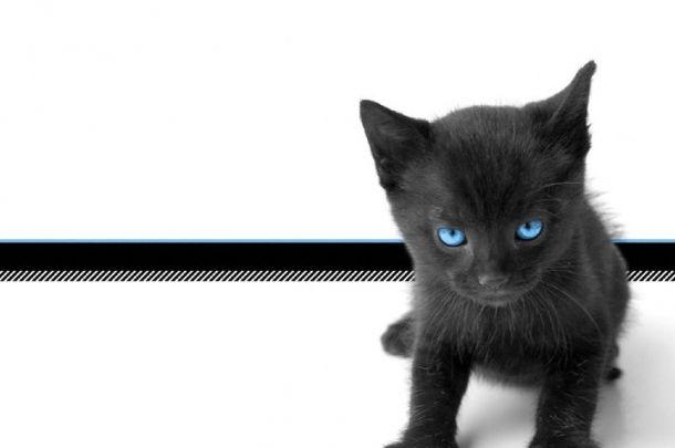 spiegazione per far avere il pelo lucido al tuo gatto #gatto #pelo #lucido #pelo #lucido