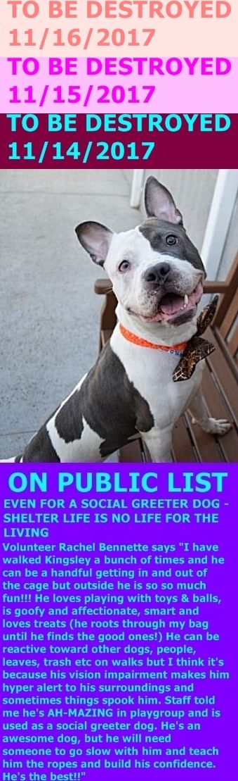 Hello, my name is Kingsley. My animal id is #9760. I am a male white dog at the Brooklyn Animal Care Center. The shelter thinks I am about 2 years 1 months old. I came into the shelter as a stray on 14-Oct-2017. http://nycdogs.urgentpodr.org/kingsley-9760/