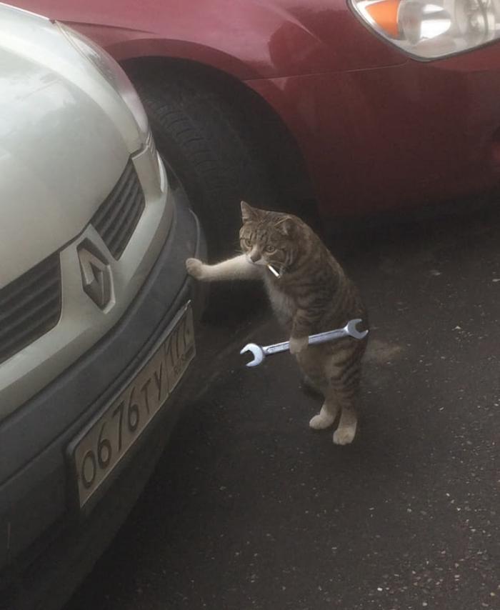 Кот чинит машину картинки