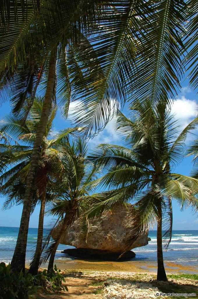 Barbados / rock hidden by palm trees / photo by MladenB