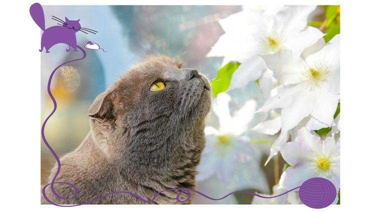 Cuidado con tus Plantas o tu Gato - Los gatos acostumbran a morder las plantas por diferentes motivos, sea por juego o diversión, o porque saben que llaman nuestra atención si los vemos mordiéndolas.  Pero, también, aunque no necesariamente está comprobado, los gatos comen el grass u otras plantas como una manera de purgarse o aliviar alguna disconformidad gastrointestinal.  Infórmate sobre las plantas tóxicas para tu gato para que las evites o tomes los cuidados necesarios!