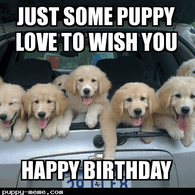 Dog Birthday Meme | Related Keywords & Suggestions for happy birthday puppy meme