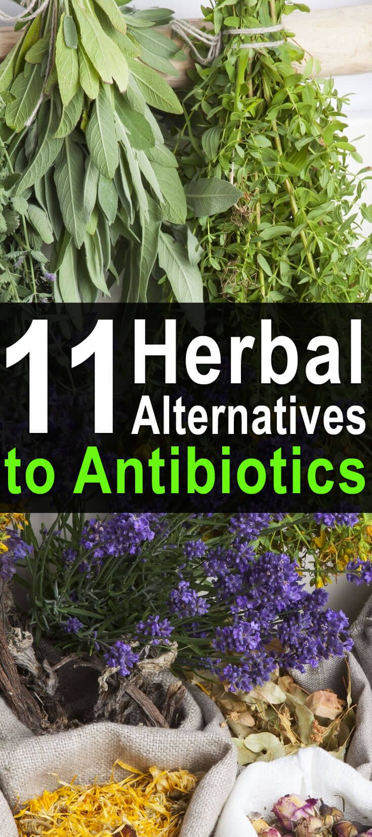 Oftentimes, the world's best medications are not the ones developed in labs, but the ones made by Mother Nature. If you would like to avoid the harmful side-effects of antibiotics or are concerned about a day when these antibiotics aren't available, consider trying these herbal alternatives.