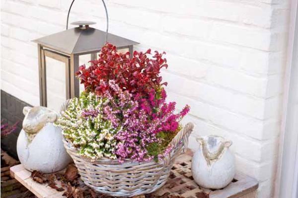 """Collection """"balcon d'hiver"""" - 4 plantes"""