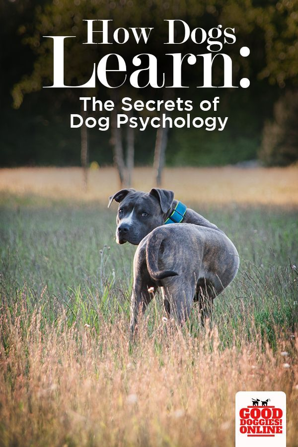 How Dogs Learn Cat And Dog Care Dog Psychology Dog Training
