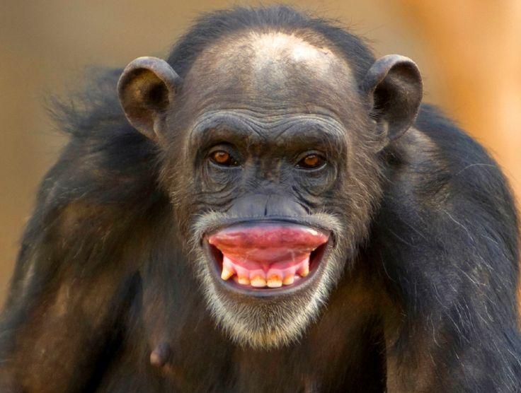 Handcrafted Novelty Monkey Face Big Smile by SurelyUneek ... |Monkey Big Smile