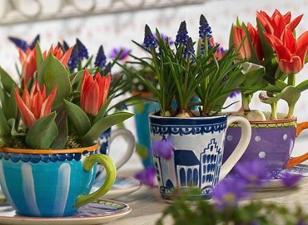Bloembollen planten in de tuin of bloembollen gebruiken in huis - soorten bloembollen
