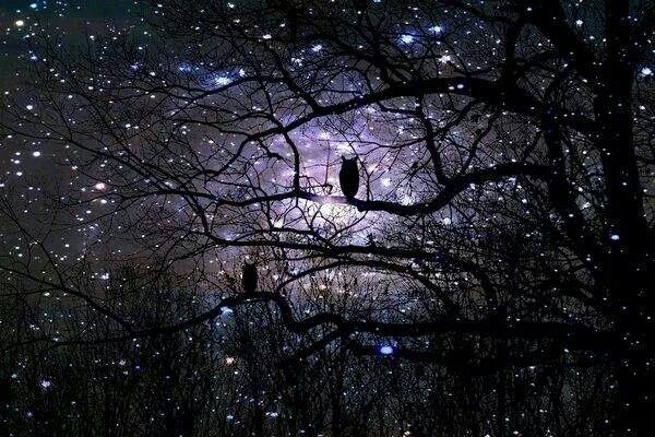 La noche q bonita