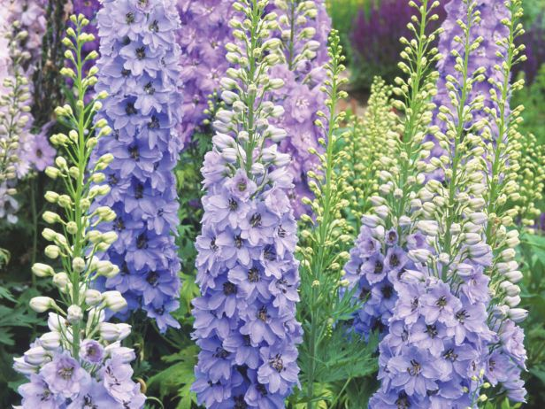 Want to attract hummingbirds to your garden? Consider these hummingbird plants that hummingbirds love to visit.