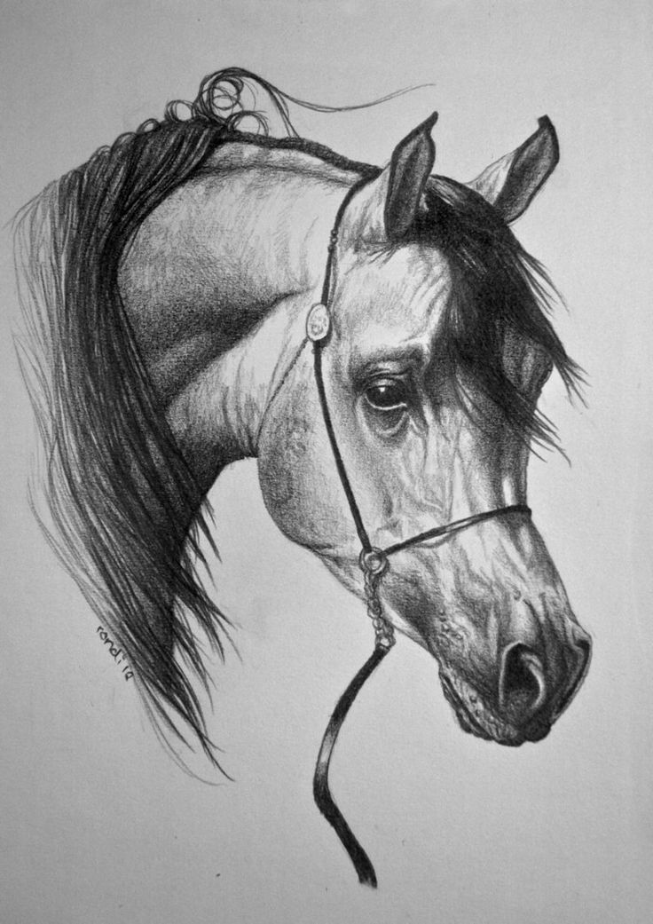 Textured Horse Sketch  |Horse Art Drawings
