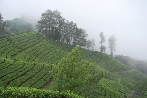Munnar, Kerala, India. Tea plantations and calm! http://blog.100days.it/munnar/