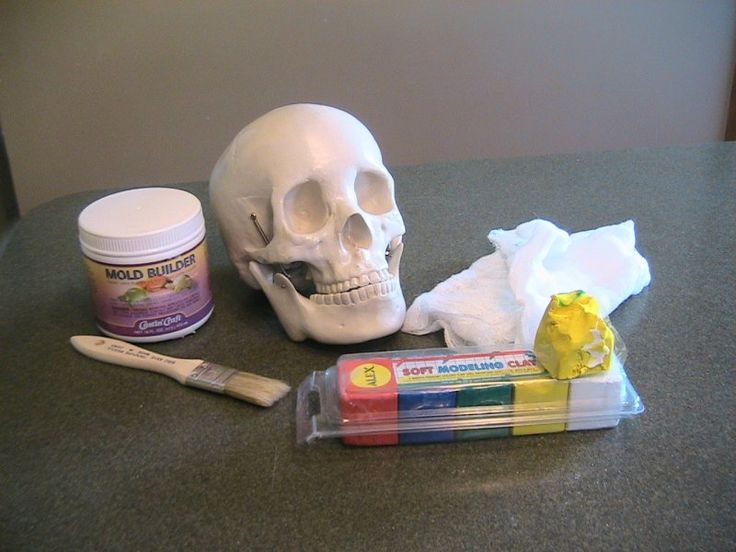 Turn your store bought skull into a mold to make more - could also be adapted for other body parts and bones