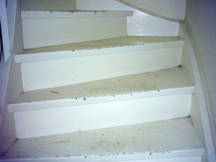 http://www.renovieren-shop.de/referenzen-videos/baustellen/treppen-trittstufen-schleifen-wasserlack-versiegeln-potsdam/  #Treppen #Trittstufen geschliffen und mit #Acryl-Wasserlack und versiegelt in #Potsdam