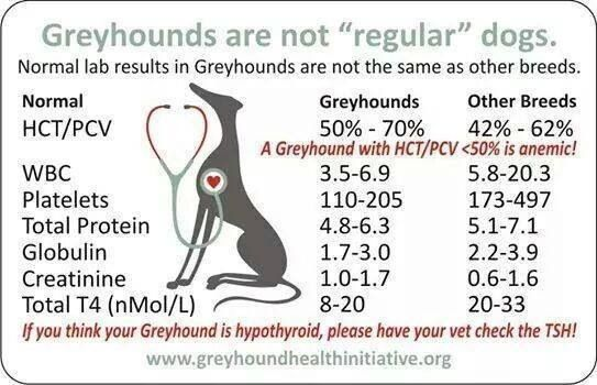 Greyhound (and Whippet) lab chart vs. other breeds. Bring to the vet to educate on what makes them different. Its IMPORTANT a vet knows!