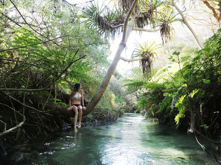 Eli Creek, Fraser Island, Australia  #fraserisland #queensland #australia www.fraserisland.net
