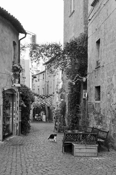 It's a catslife, Orvieto