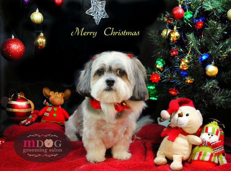 Merry Christmas Bb