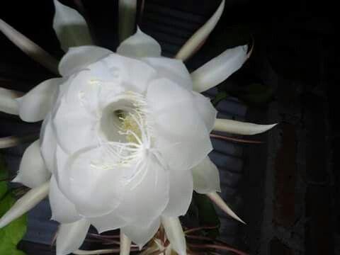 Entah bunga