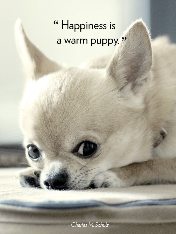 Best Puppy Quotes Ideas On Pinterest Dog Quotes Cute Dog - Seeing tiny puppies trying to walk for the first time will melt your heart