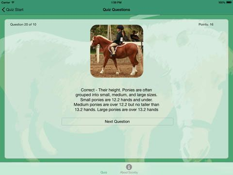 Around the World Pony Quiz - learn about horses