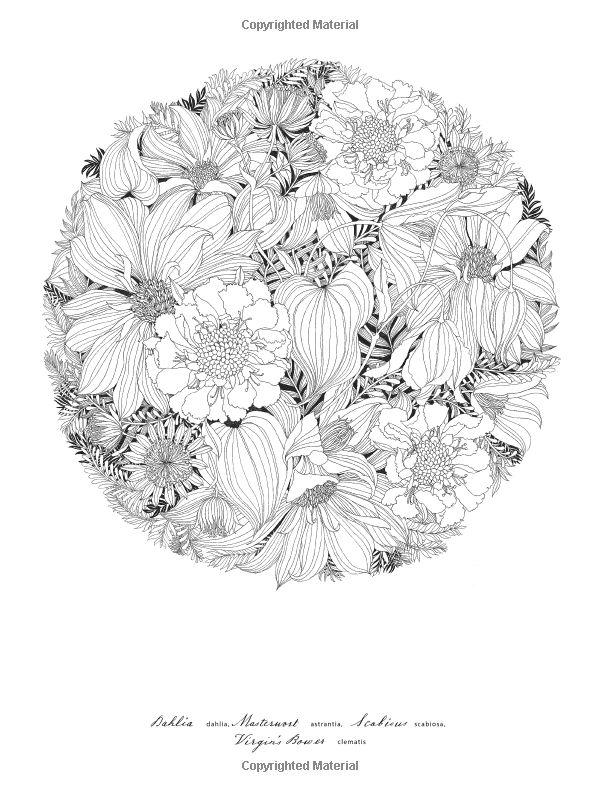 Floribunda A Flower Coloring Book Leila Duly 9781780677682 Amazon