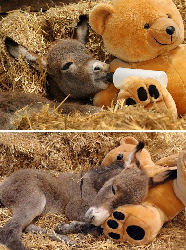 Pin By Ilyas Aouadi On Animals Cute Donkey Baby Donkey Cute Baby Animals