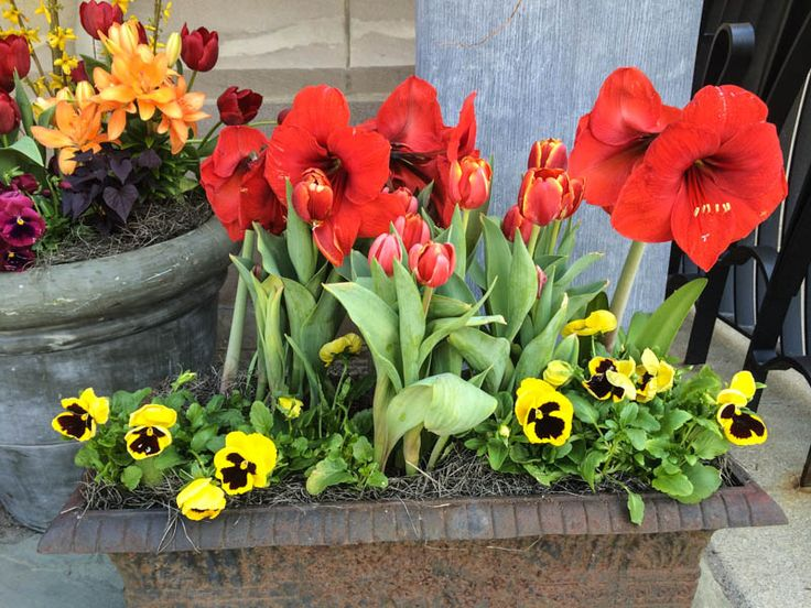 Thinking Outside the Boxwood, Toulouse-Lautrec inspired planters for Art In Bloom, Columbus Museum of Art