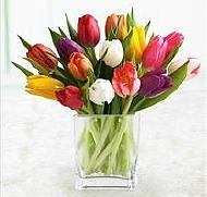 Populairste Bloemen Kleuren van Nederland. Welke bloemen kleuren zijn het populairst in Nederland? Rode bloemen zijn het meest favoriet met 22% en worden graag gegeven met Valentijnsdag en Moederdag. Witte bloemen koopt de Nederlander voor thuis op de vaas.    1) Rood  2) Geel   3) Wit  4) Roze  5) Oranje    (Onderzoek Productschap Bloemen 2011)