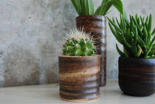 Ceramics, mobach, ravelli, cactus, plants