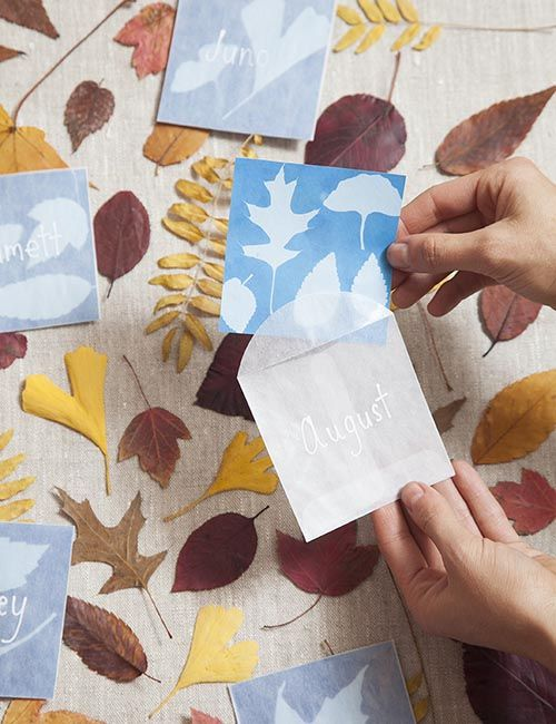 DIY Projects: Sun-Print Place Cards by Jessica Marquez http://www.designsponge.com/2014/11/thanksgiving-diy-projects-sun-print-place-cards.html http://www.sunprints.org/products/