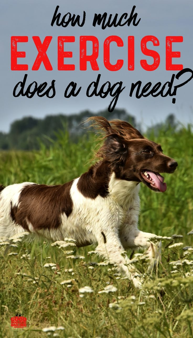 How Much Exercise Does My Dog Need Dogs Online Dog Training