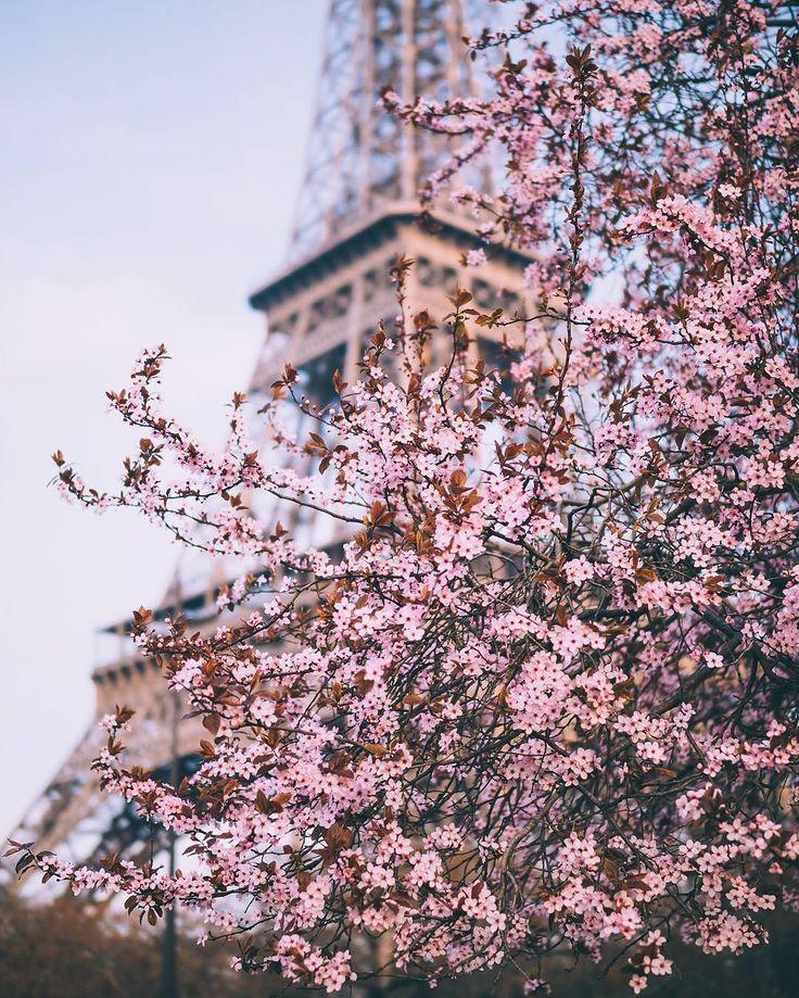 Cherry Blossom Tower