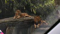 Mild Notes: Enjoy The Indonesian Safari Park at Cisarua - Bogor With Your Beloved Family
