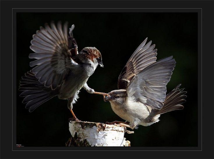 Shut It!: Life, Lively Sparrows, Sparrows Suzume, God S Art