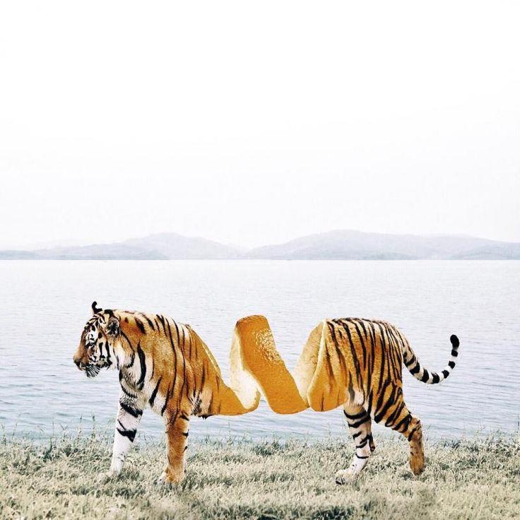 Tigre laranja. Foto manipulação de Luisa Azevedo