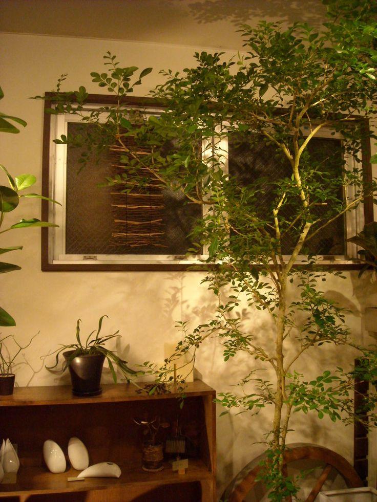 Luft News 室内ツリー グリーン インテリア 室内 観葉植物