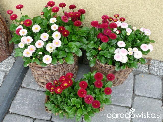 Na Francuskiej Strona 12 Forum Ogrodnicze Ogrodowisko Floral Wreath Floral Decor